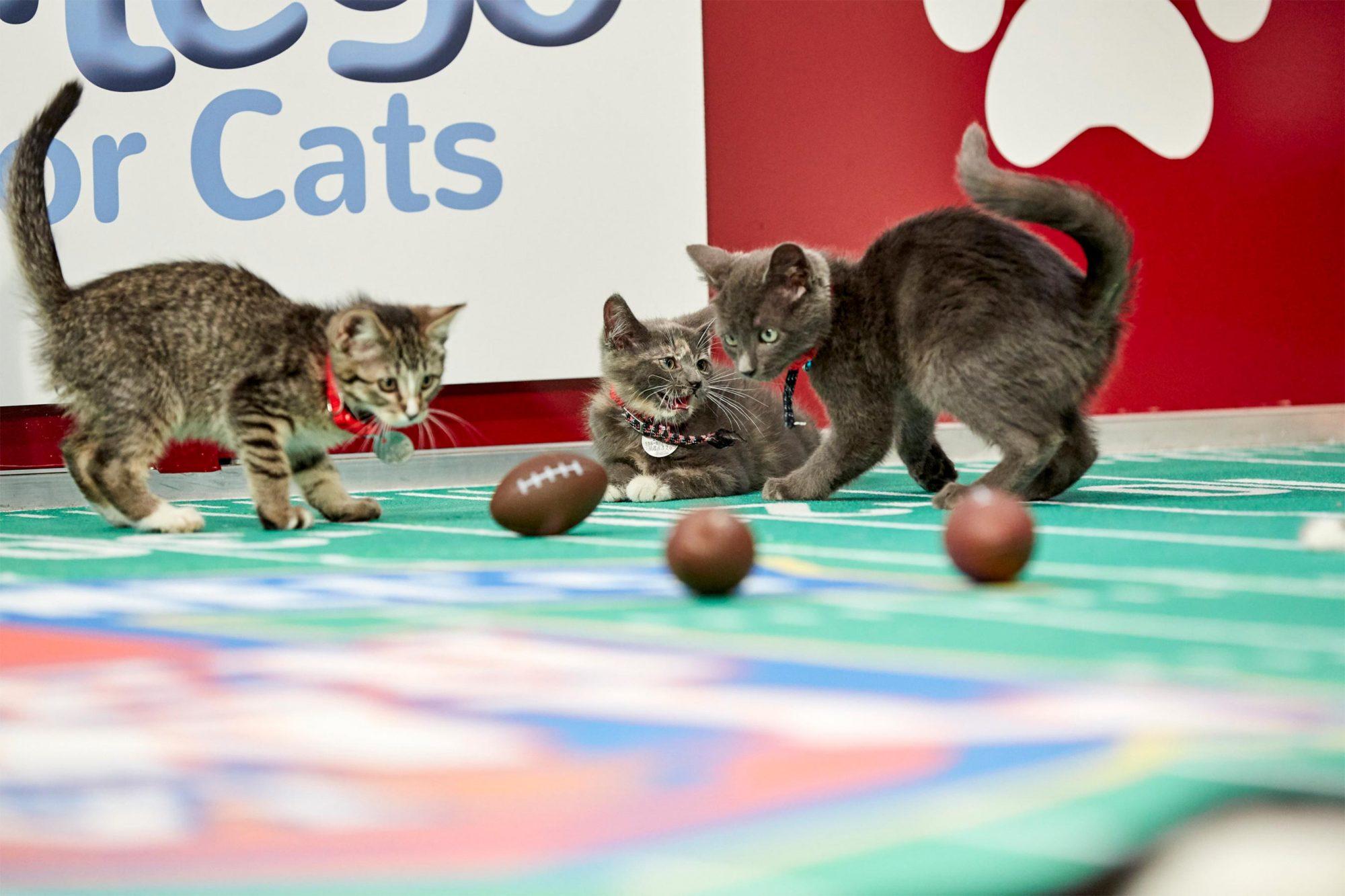 Kitten Bowl VI Final Photo Assets