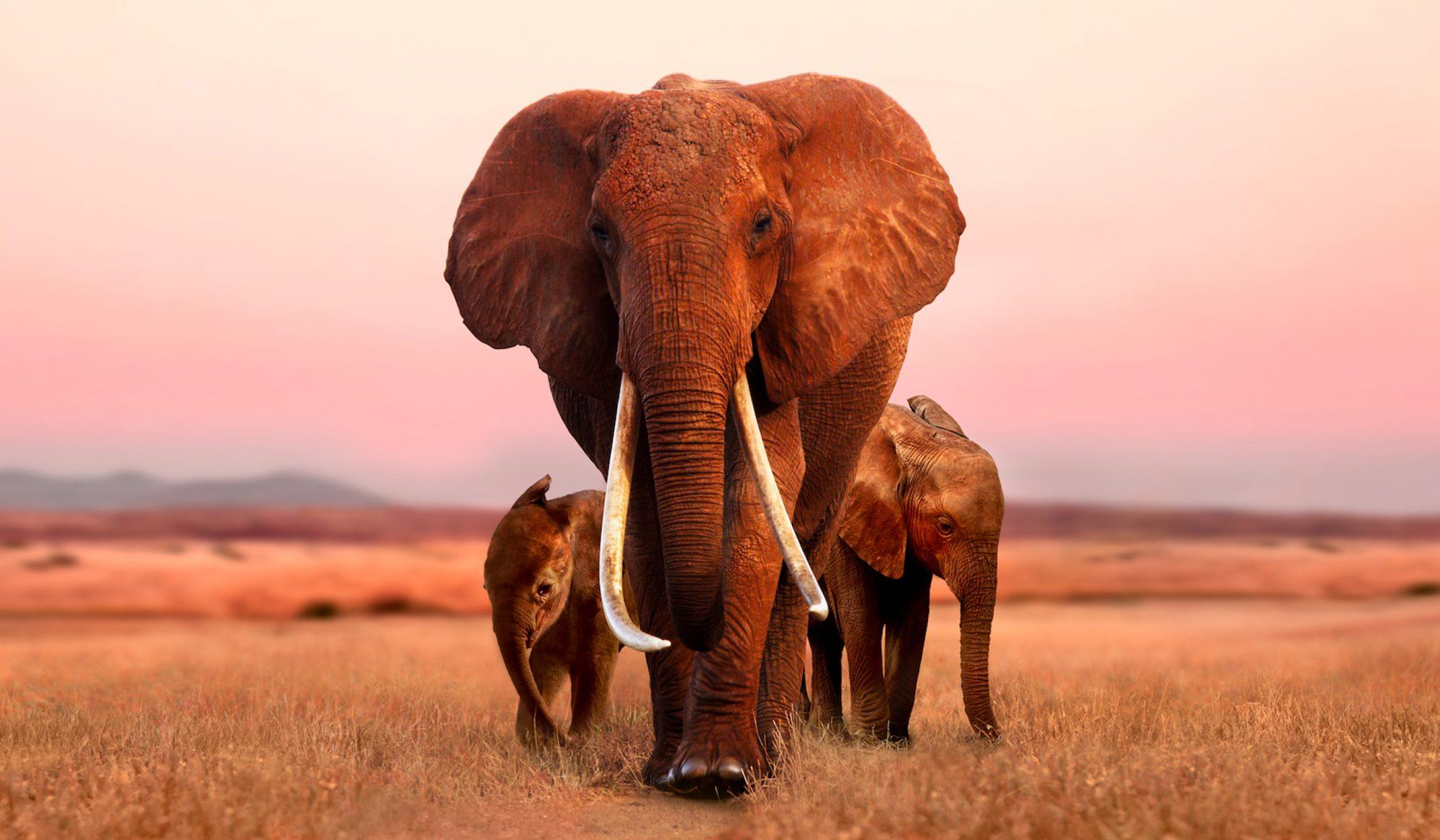 The Elephant Queen - Still 1
