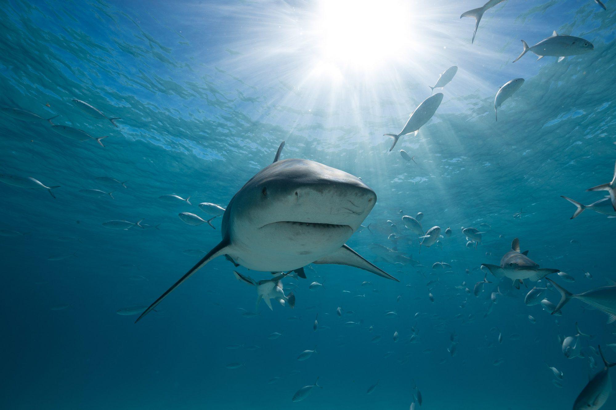 SHARKS GONE WILD 2 - GENERIC SHARK PHOTOS
