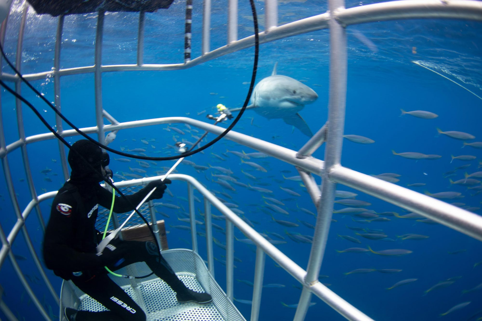 Great White Kill Zone: Guadalupe