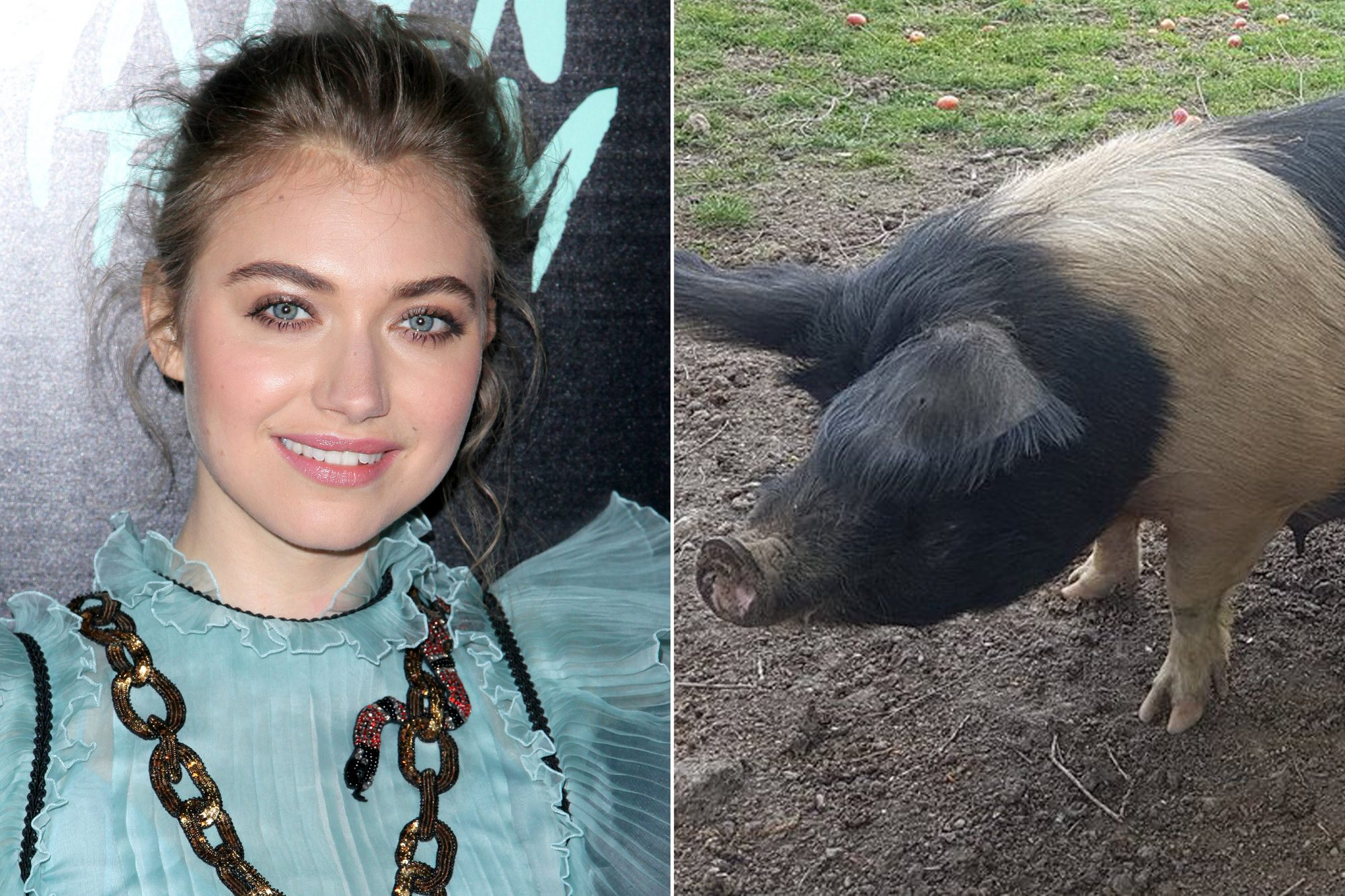 Imogen Poots and Pig Imogen Poots