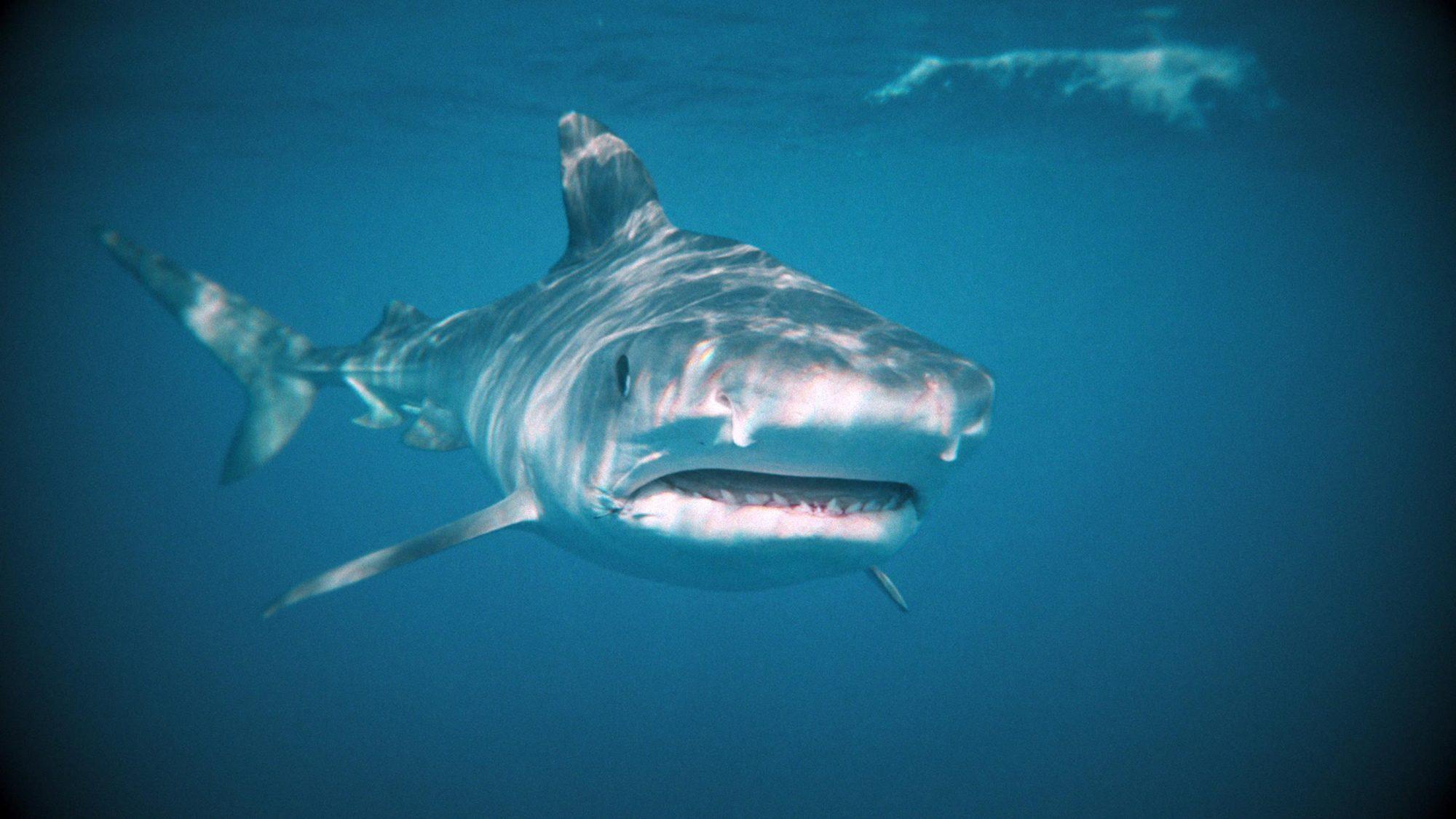 I WAS PREY: SHARK WEEK