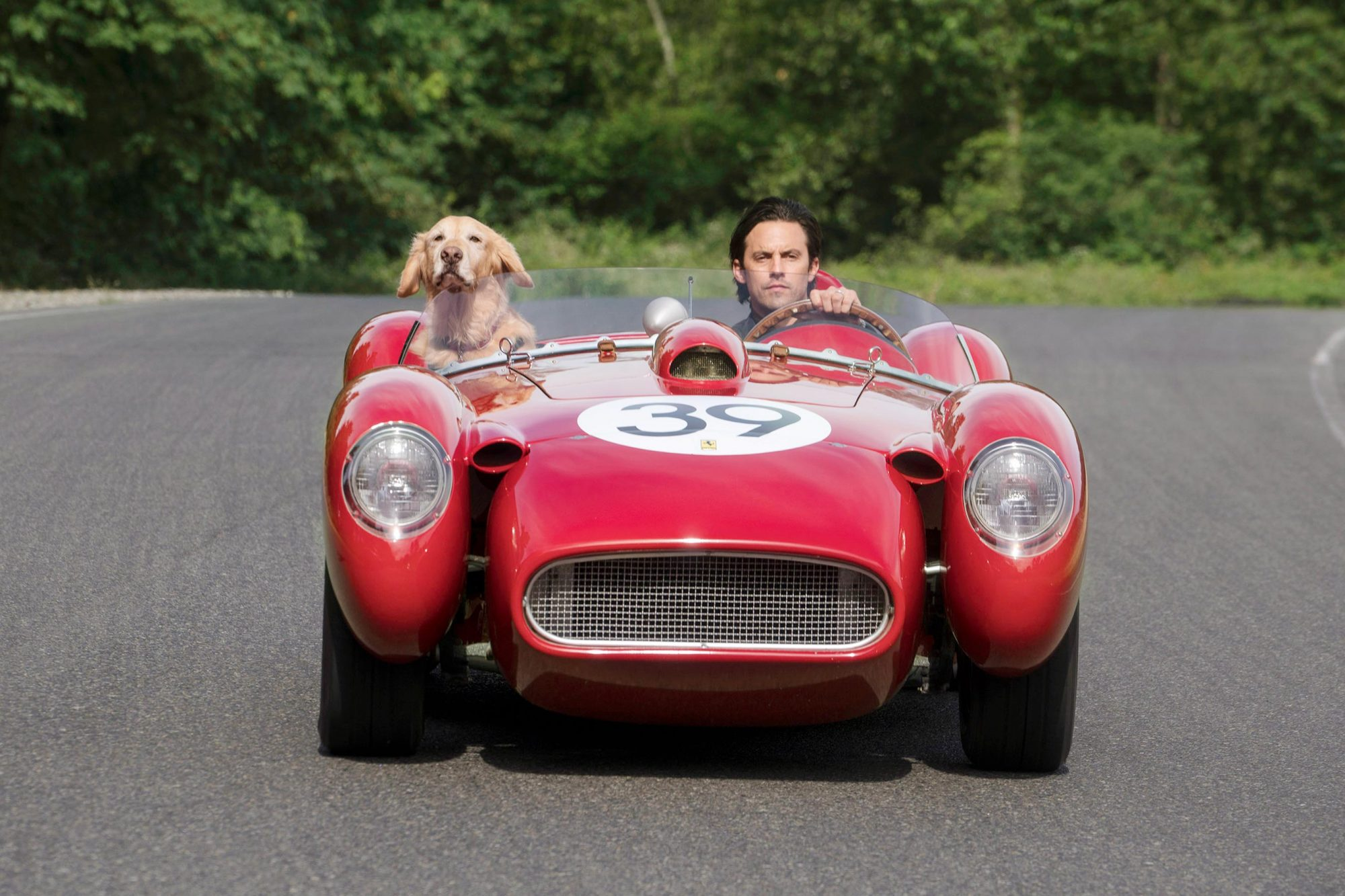 "THE ART OF RACING IN THE RAIN L-R: ""Enzo"" and Milo Ventimiglia"