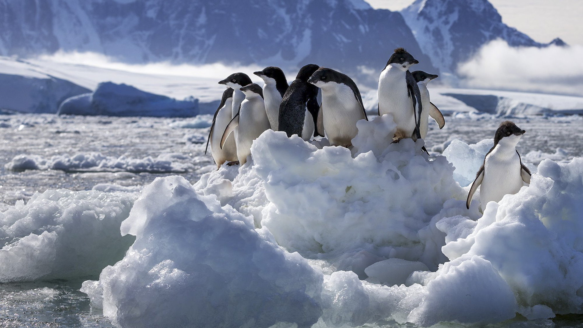 Disneynature Penguins