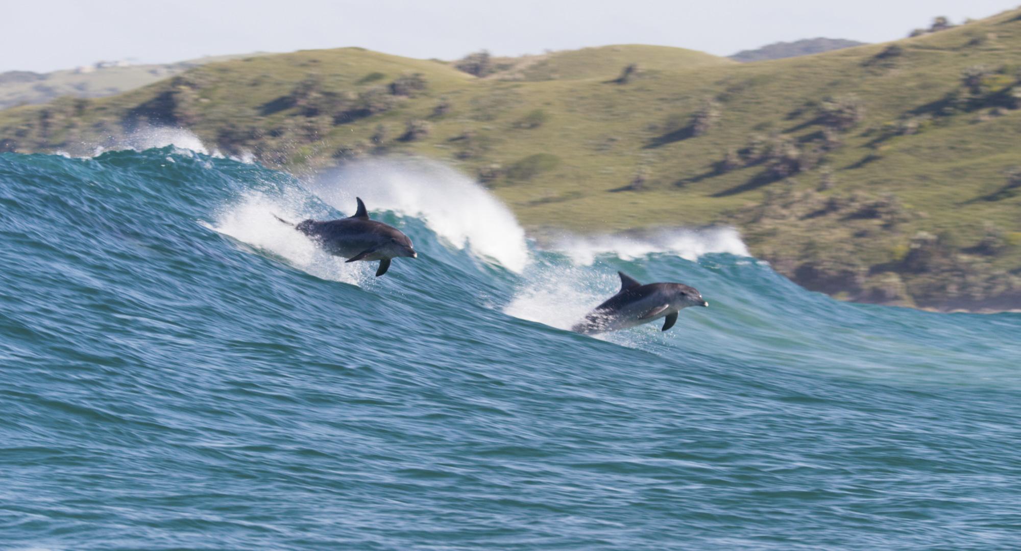 Dophin Reef