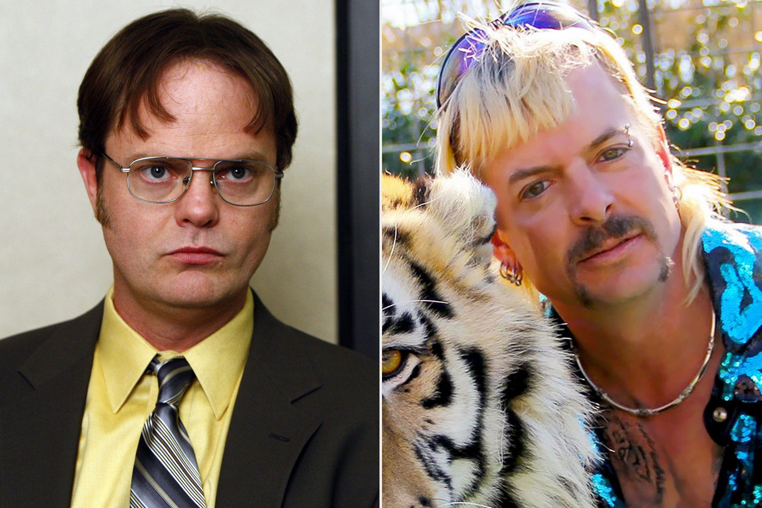 Dwight Schrute, Tiger King