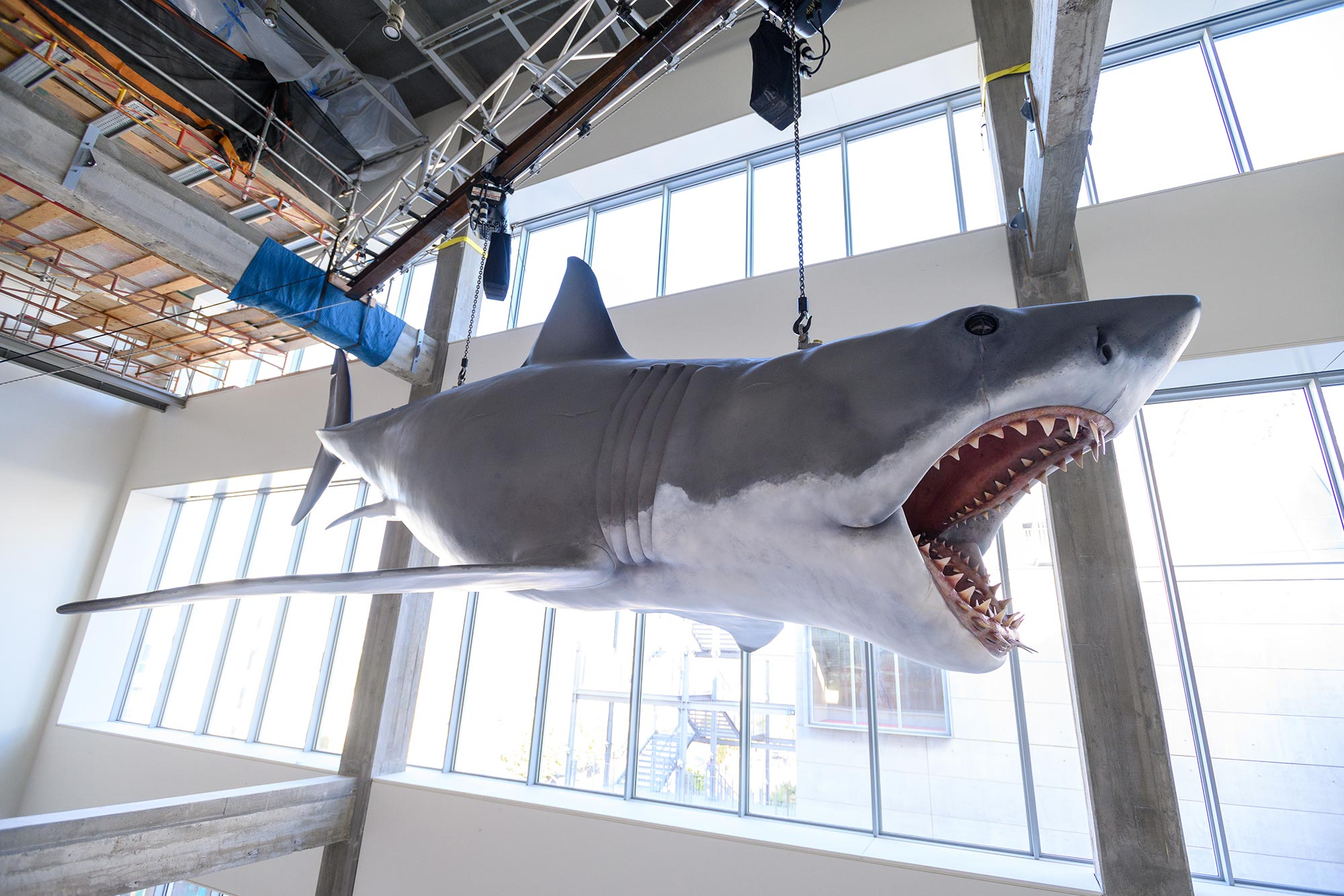 Bruce the shark from Jaws at the Academy Museum