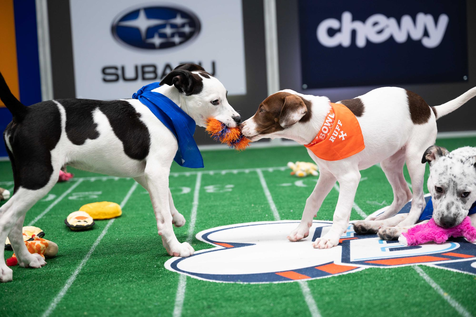 Here are all 70 puppies competing in Puppy Bowl XVII