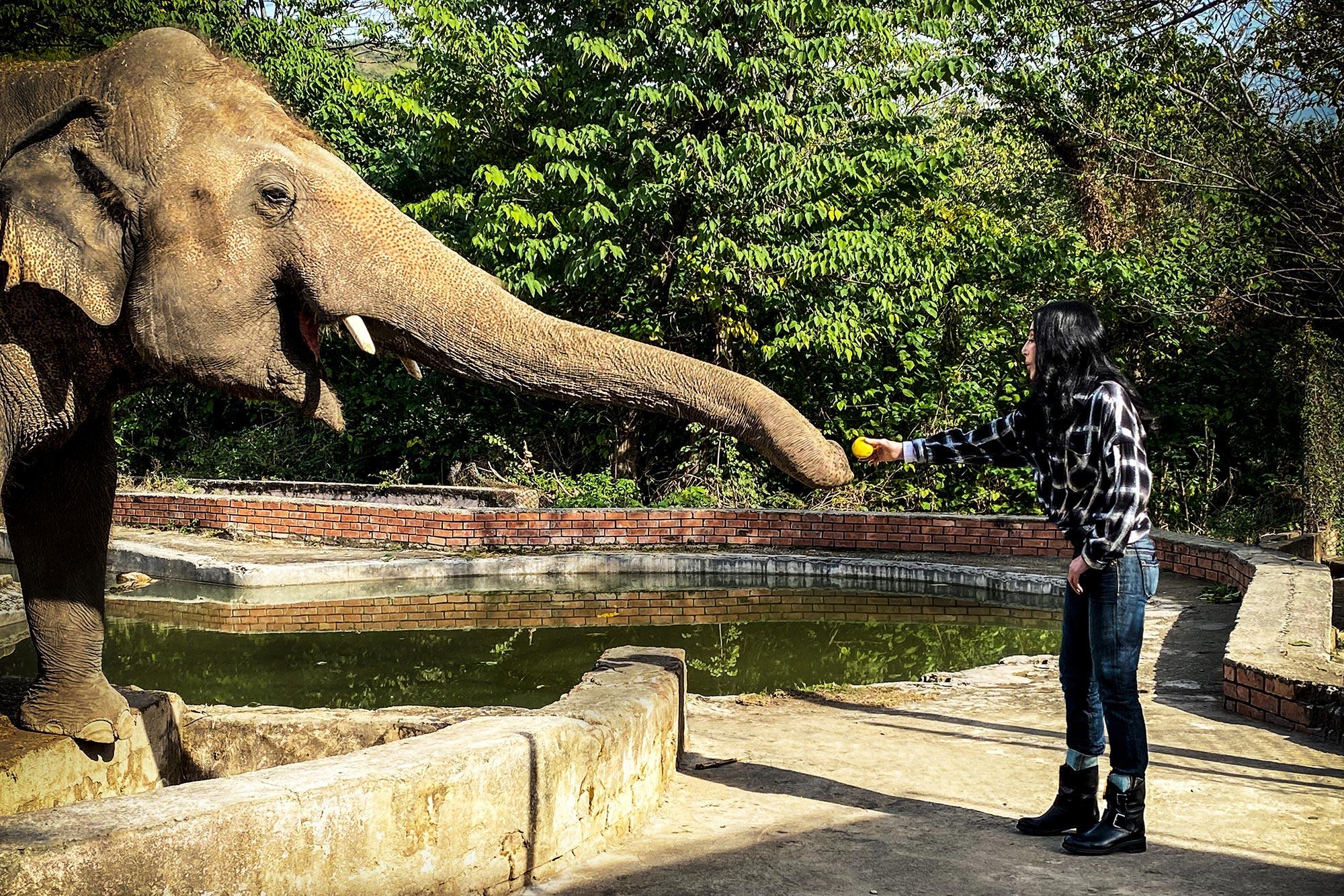 Free the Wild elephant documentary