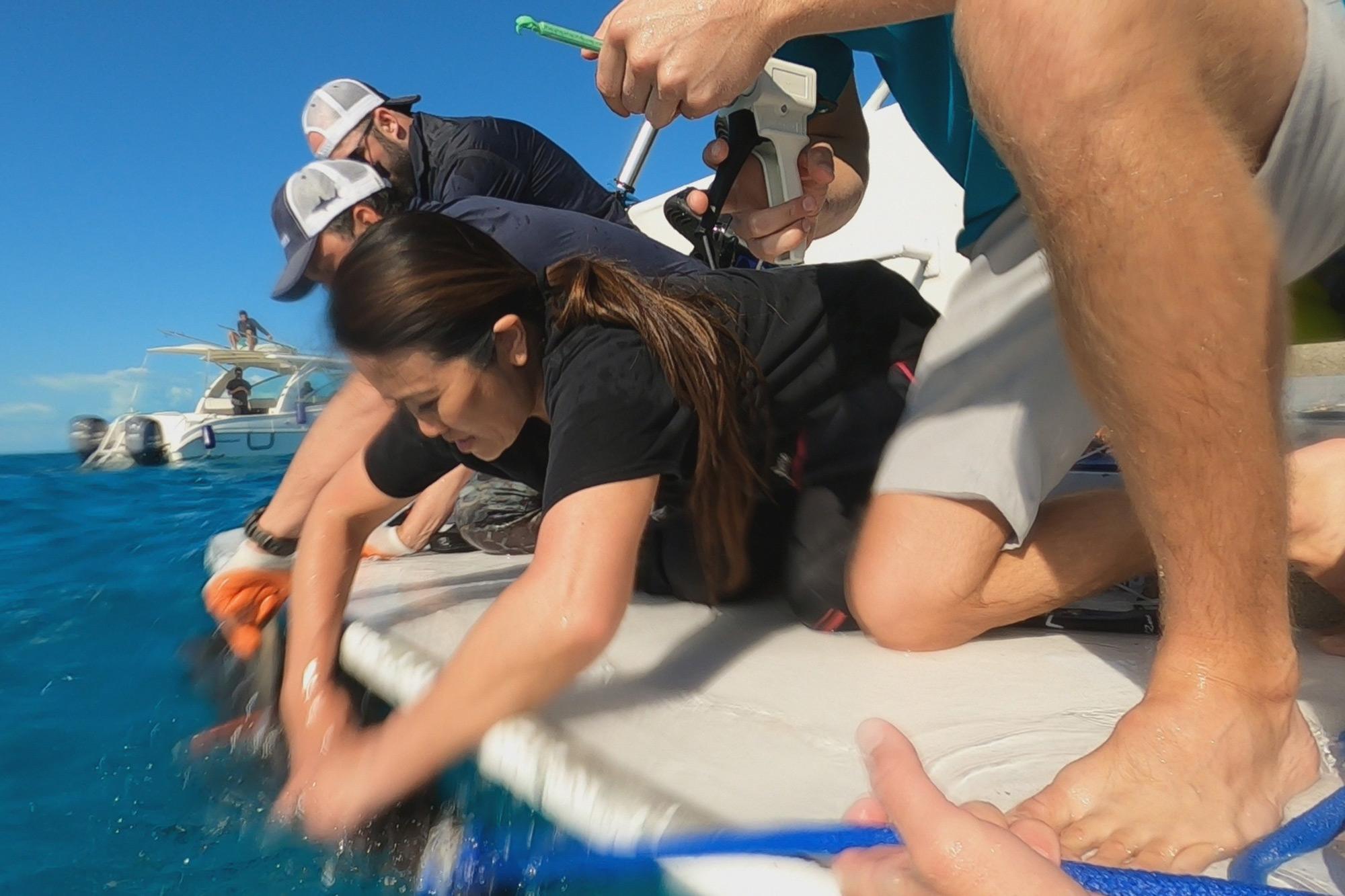 Shark Week 2021 DR. PIMPLE POPPER POPS SHARK WEEK