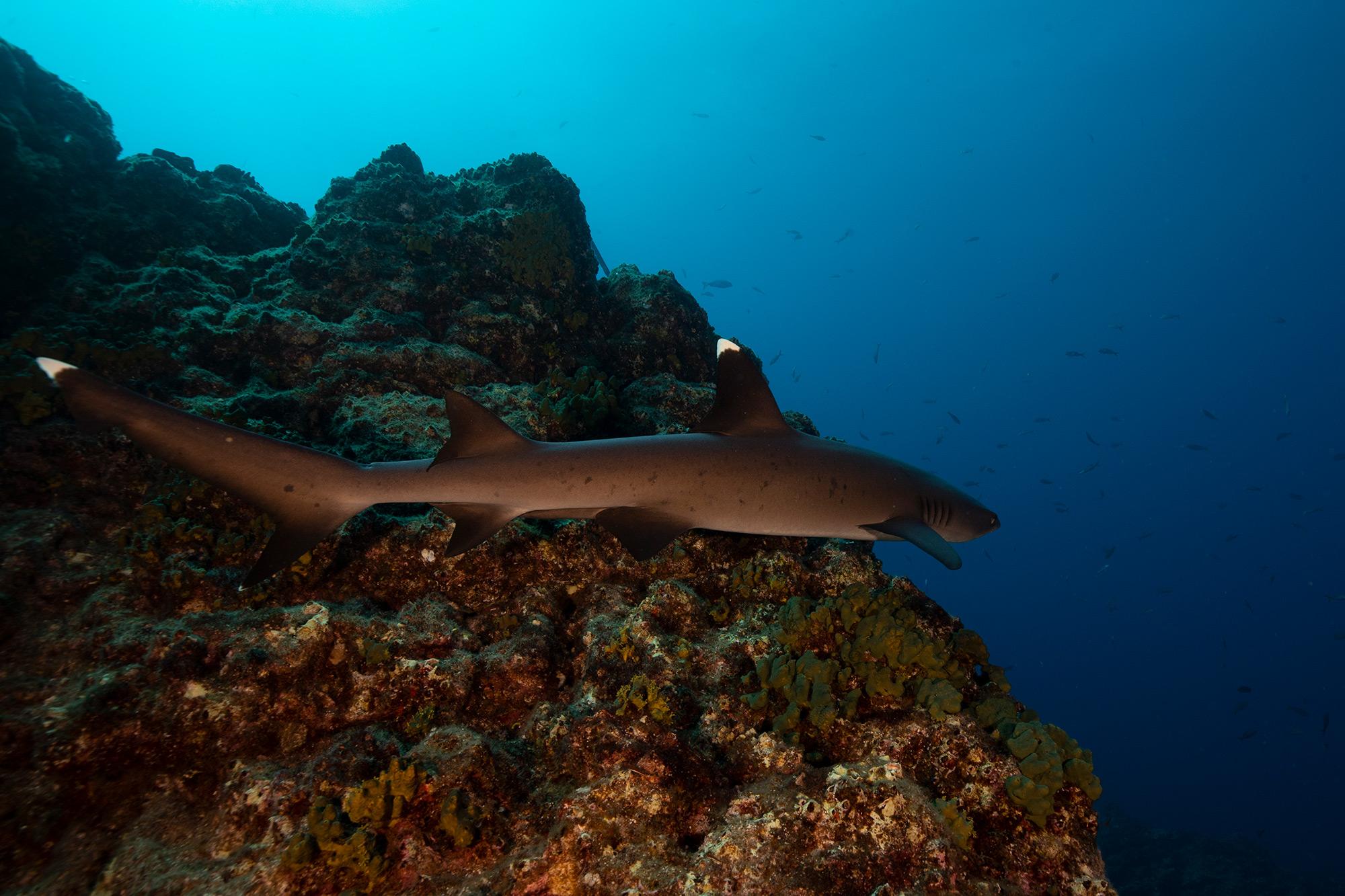 Shark Week 2021 MYSTERY OF THE BLACK DEMON SHARK