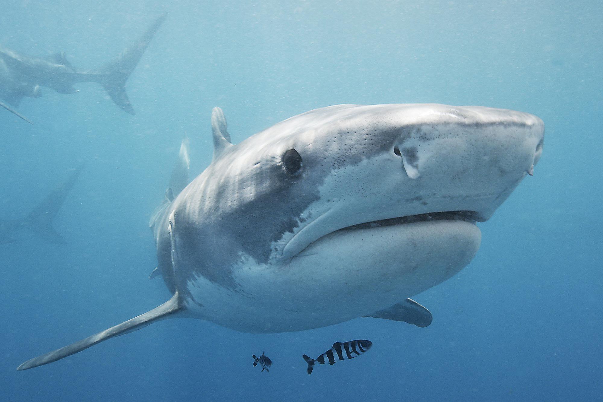 Shark Week 2021 RETURN TO HEADSTONE HELL