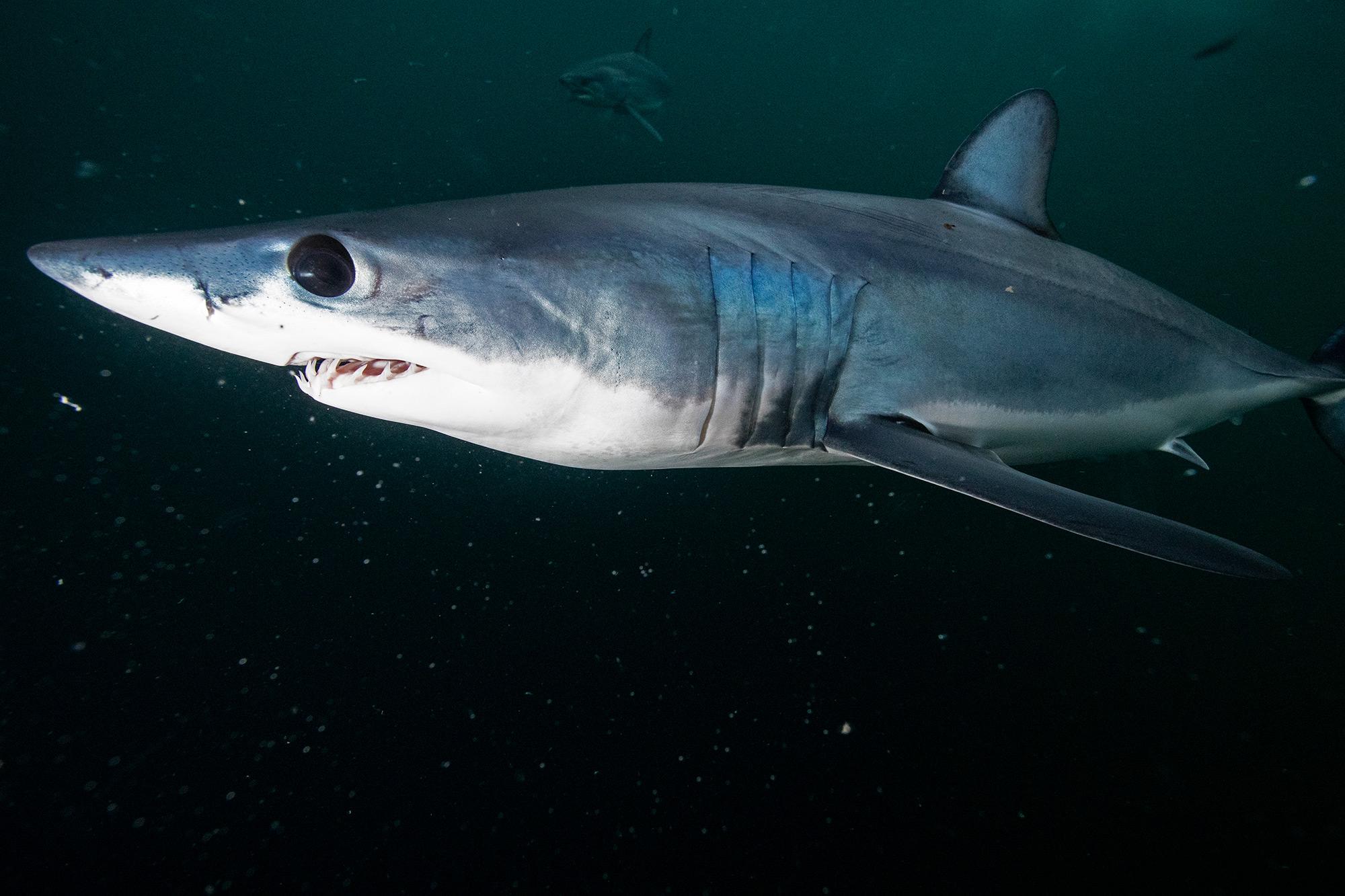 Shark Week 2021 RETURN TO SHARK VORTEX