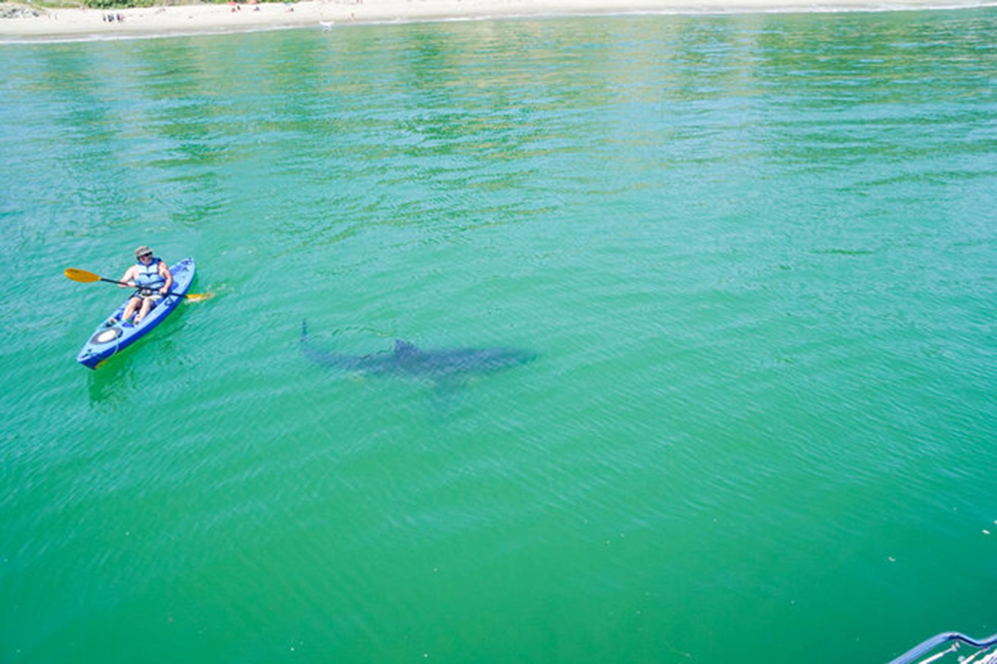 Shark Week 2021 SHARKADELIC SUMMER 2