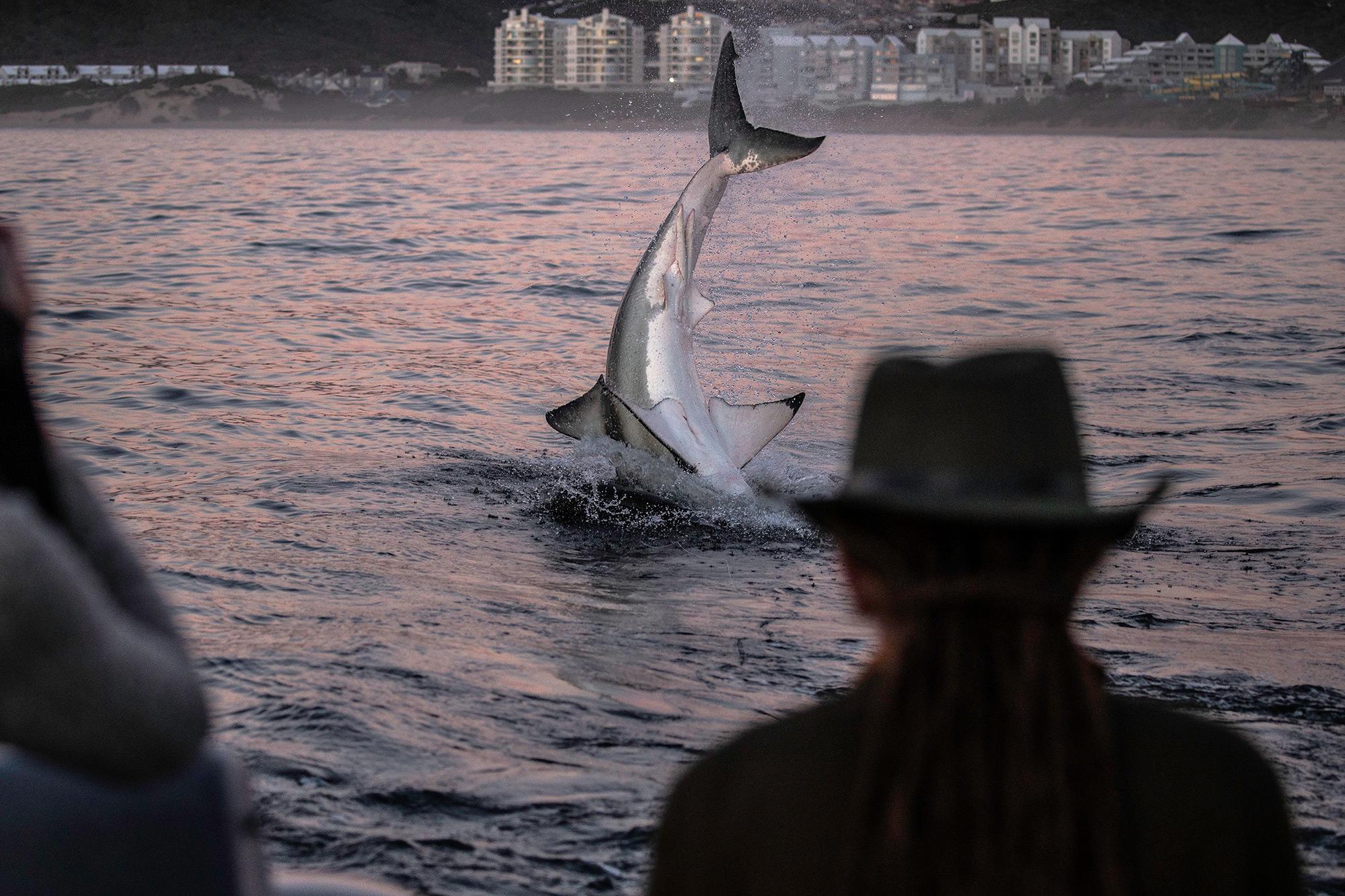 Shark Week 2021 THE SPAWN OF EL DIABLO