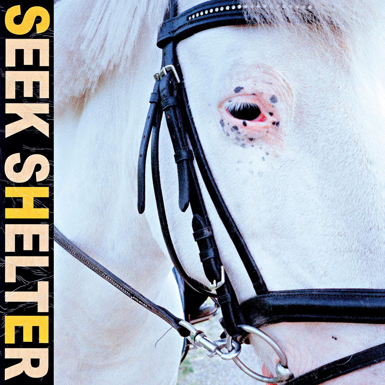 Iceage—Seek Shelter