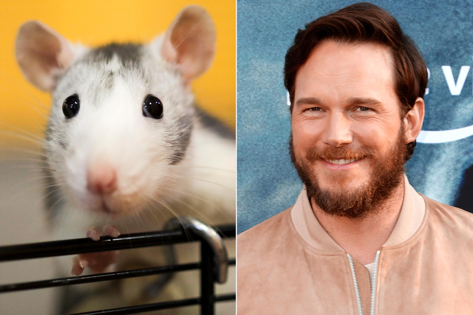 One of the rodent performers in The Suicide Squad was named Crisp Ratt; Chris Pratt
