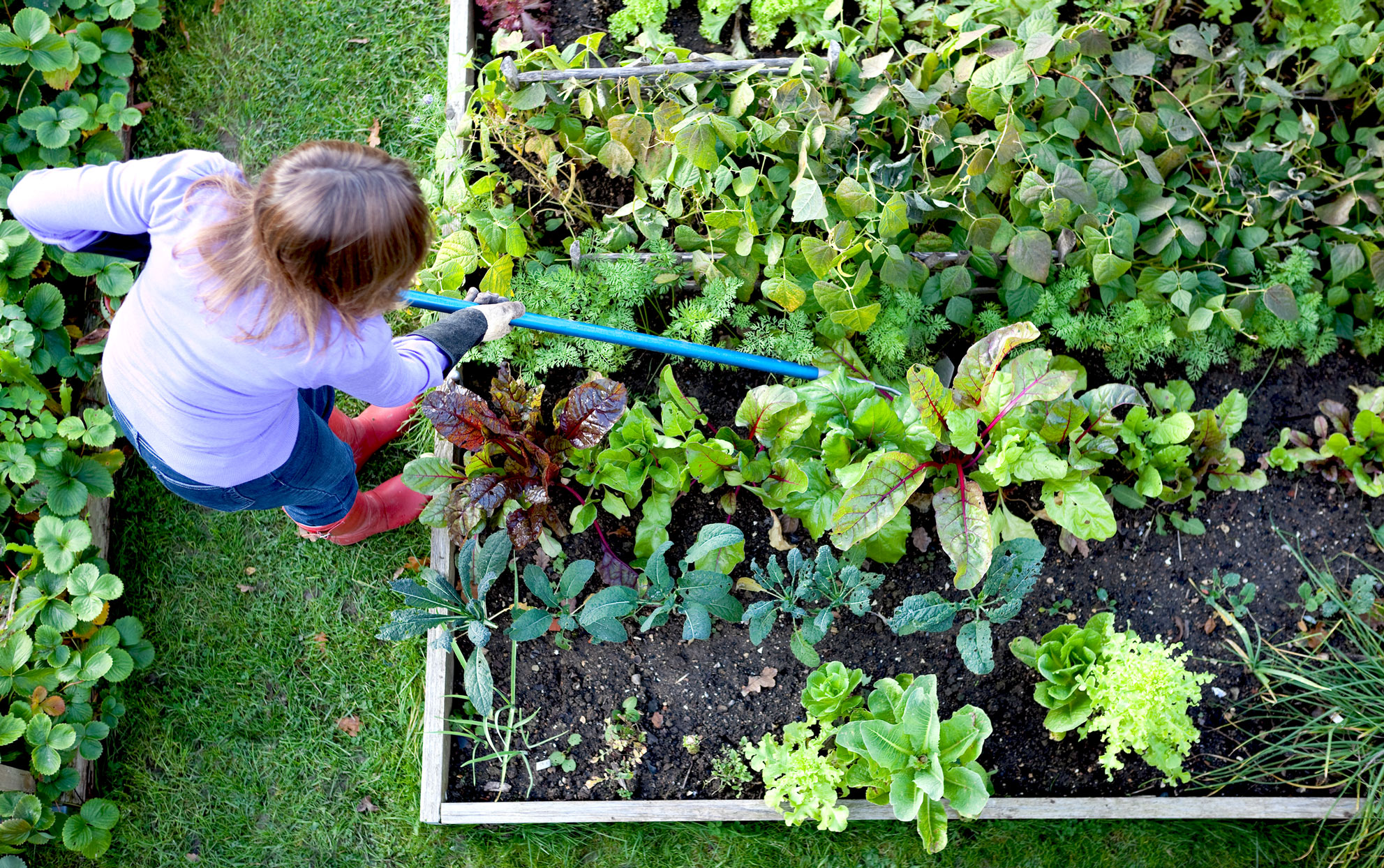 Overhead view of a woman tending to a raised garden bed