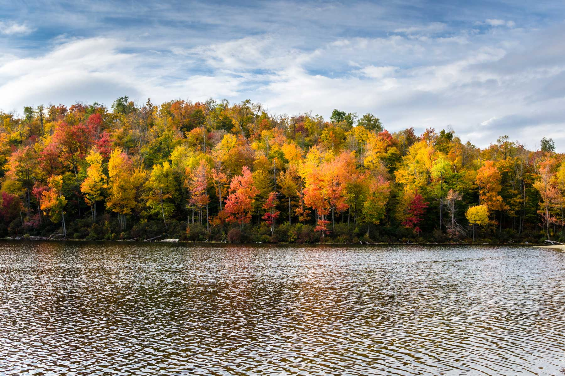 Wooded Shores of a Mountain Lake in Autumn. Vibrant Fall Foliage.