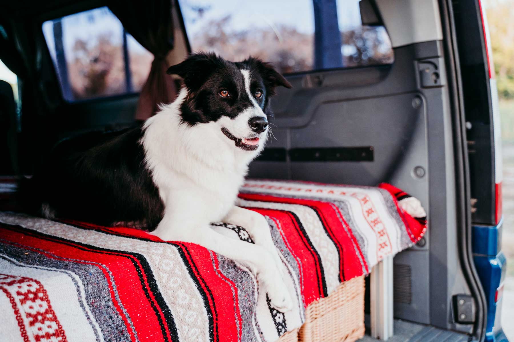 Dog in van camping outdoors
