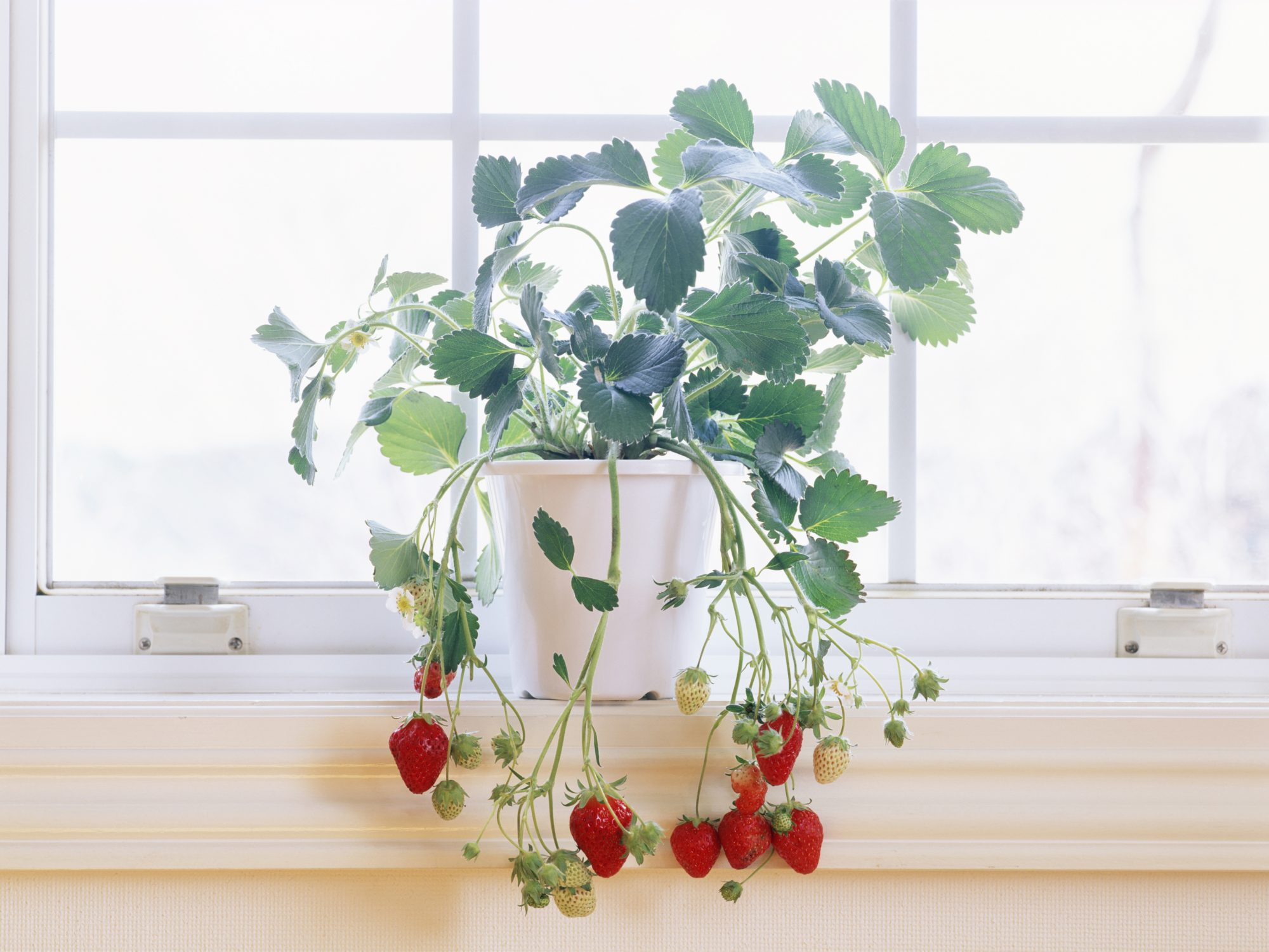 foods-to-grow-indoors