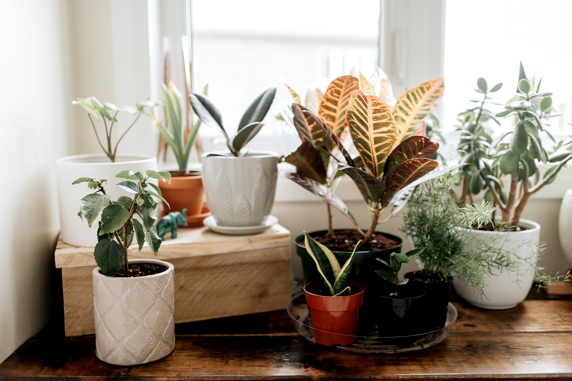potted plants in windowsill