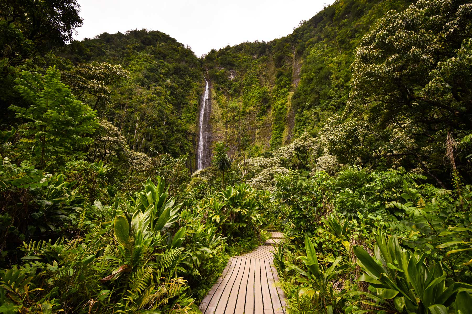 Wooden footbridge in the overgrown tropical forest to the Makahiku waterfall in Maui, Hawaii