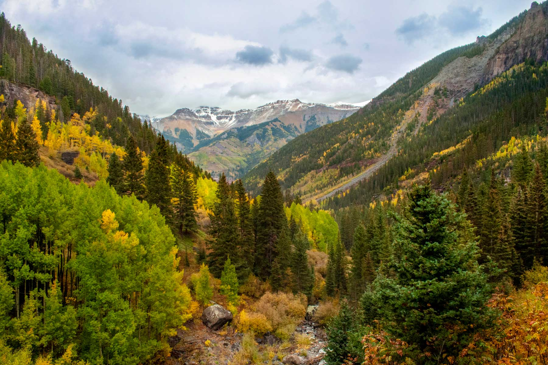 Trees and mountains in fall in Telluride, Colorado