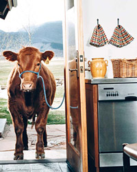 images-sys-fw200611_ecoliving.jpg