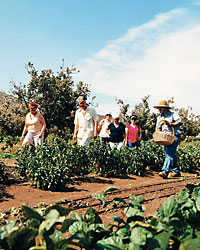images-sys-fw200712_a_mexicanspa.jpg