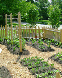 images-sys-200806-a-gardening-chicago.jpg