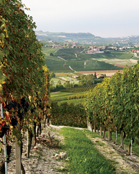 images-sys-200807-a-boroli-piedmont-vineyards.jpg