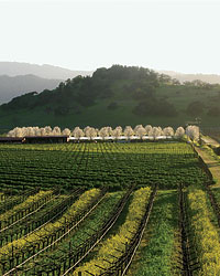 images-sys-200809-a-boutique-wine-tours.jpg