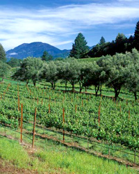 images-sys-200804-a-napa-valley.jpg