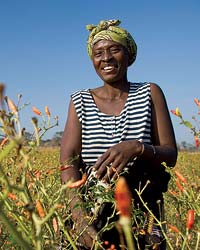 images-sys-200811-a-chilies-africa.jpg