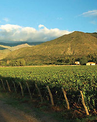 images-sys-fw200801_a_malbec.jpg