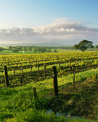 images-sys-200409-a-wine-country-australia.jpg