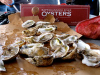 A Day with Rappahannock River Oysters