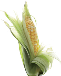 images-sys-201009-a-trend-corn.jpg