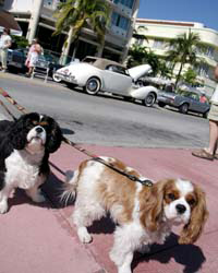 Dog-Friendly Miami