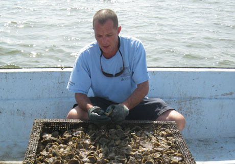 Oyster Company of Virginia