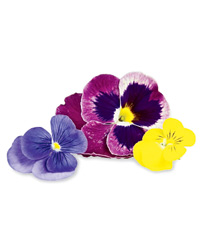original-201207-a-gourmet-foods-edible-flowers.jpg
