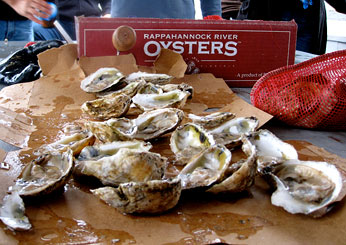 Day 4: A Day with Rappahannock River Oysters