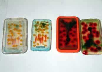 Jell-O Flash Cards for Kids