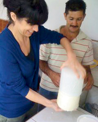 Cow-milking and cheese-making.