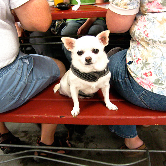 Dogs Dining Out: Tin Shed Garden Café; Portland, OR