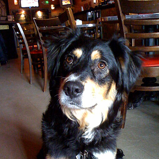 Dogs Dining Out: Norm's Eatery & Ale House; Seattle
