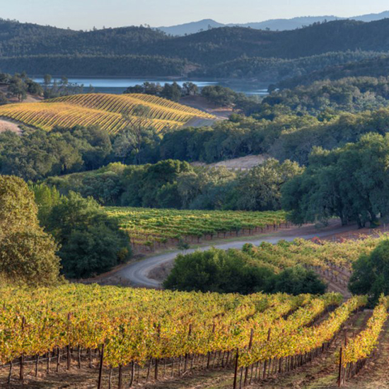 Napa Wineries: Buehler Vineyards