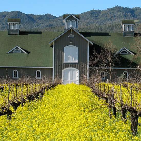 Napa Wineries: Corison