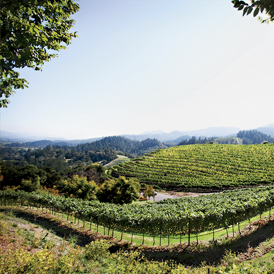 Napa Wineries: Newton Vineyard